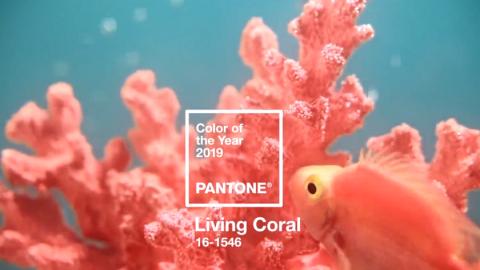 PANTONE 16-1546 Living Coral y un baño de color